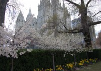 Temple Square in Spring